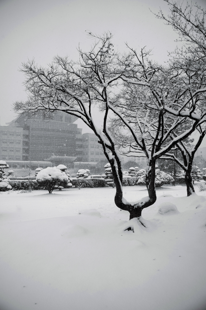 Gung-hap Tree